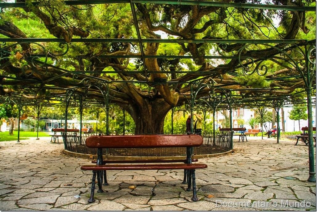 Jardim do Príncipe Real, cedro-do-Buçaco