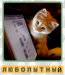 любопытный кот заглядывает в монитор компьютера