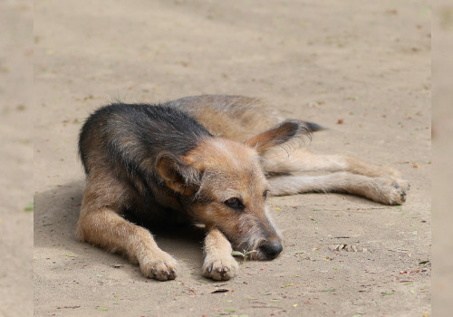 The Sign of Rabies in Dog