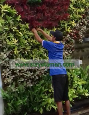 Jasa Pembuatan Taman Vertikal Garden - SuryaTaman