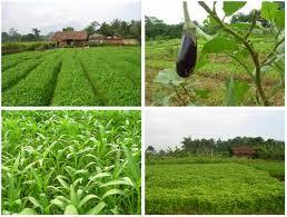 sistem pertanian organik