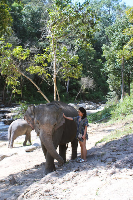 Elephant Jungle Sanctuary, Chiang Mai