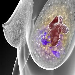 Prêmio Nobel de Medicina trabalha no sistema celular para detectar níveis de oxigênio