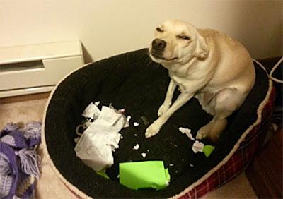 perro rompio documentos