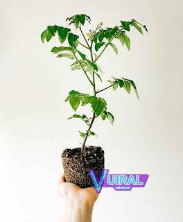 Contoh Simbiosis Mutualisme Manusia Dengan Tumbuhan
