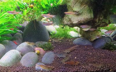 Descubre algunos de los beneficios que aporta la práctica del acuarismo