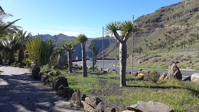 Blick auf den Mirador César Manriques mit Sukkulenten, Palmen, Drachenbäumen und der Straße ins Tal - rechts sind die Berge zu sehen.