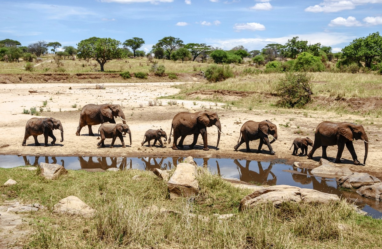 African Safari Ideas with elephants