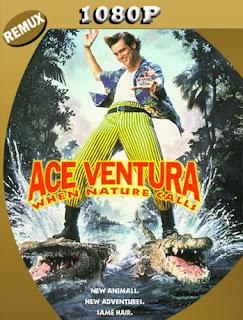 Ace Ventura (1995) BDREMUX [1080p] Latino [Google Drive] Panchirulo