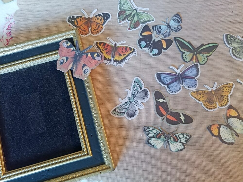Butterfly Specimen Art - Thrift Shop Flip