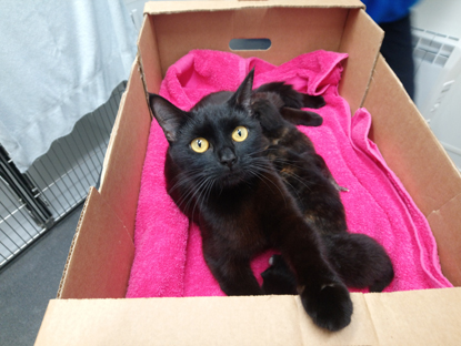 black cat and kittens in cardboard box