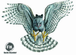 bird s lifestyle american harpy eagle