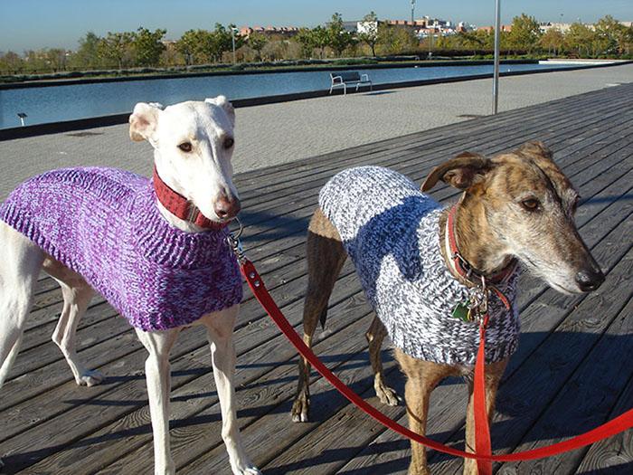 Jersey de punto para galgo - Danka y Keka: entre chuches y costuras