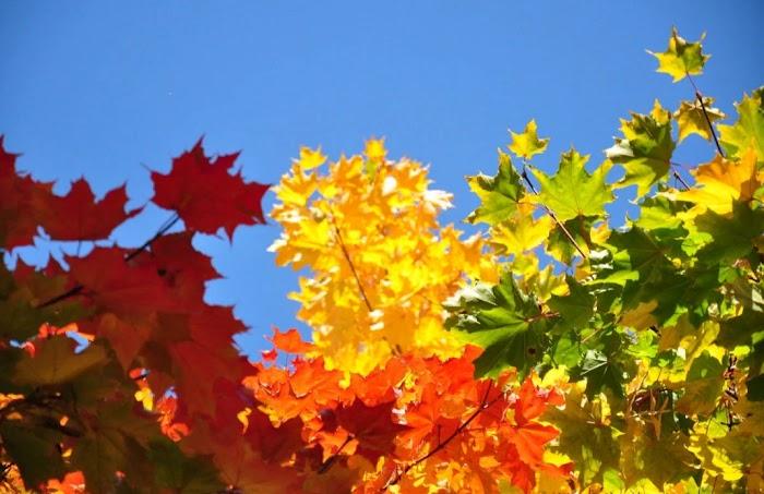 21 - 29 сентября: период большой удачи для трех знаков Зодиака