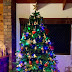 Know the importance of Christmas tree and the history of Christmas tree, how and when it started its tradition! Christmas day special