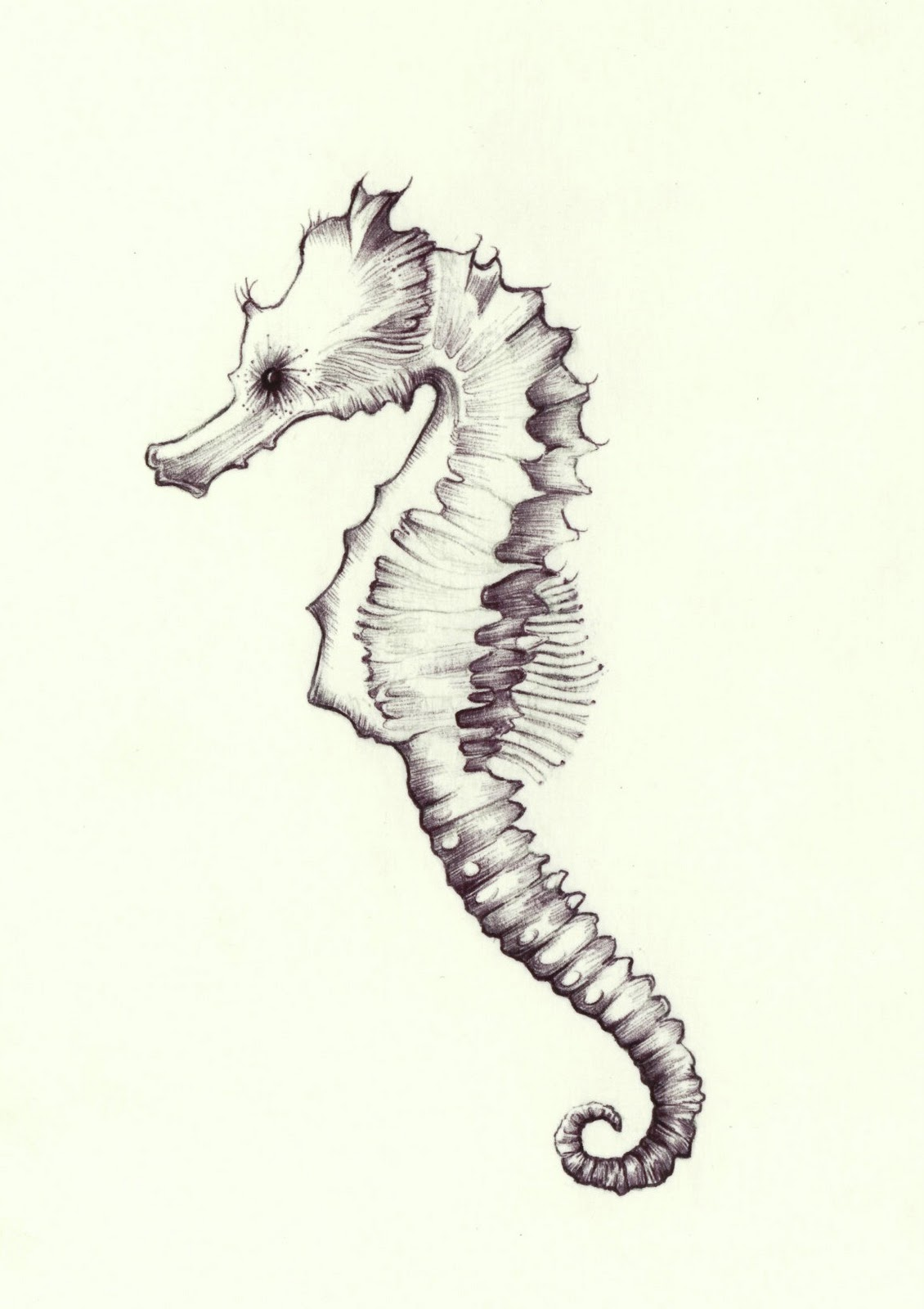 December 1, 2011 - Seahorse | A Drawing a Day for a Year