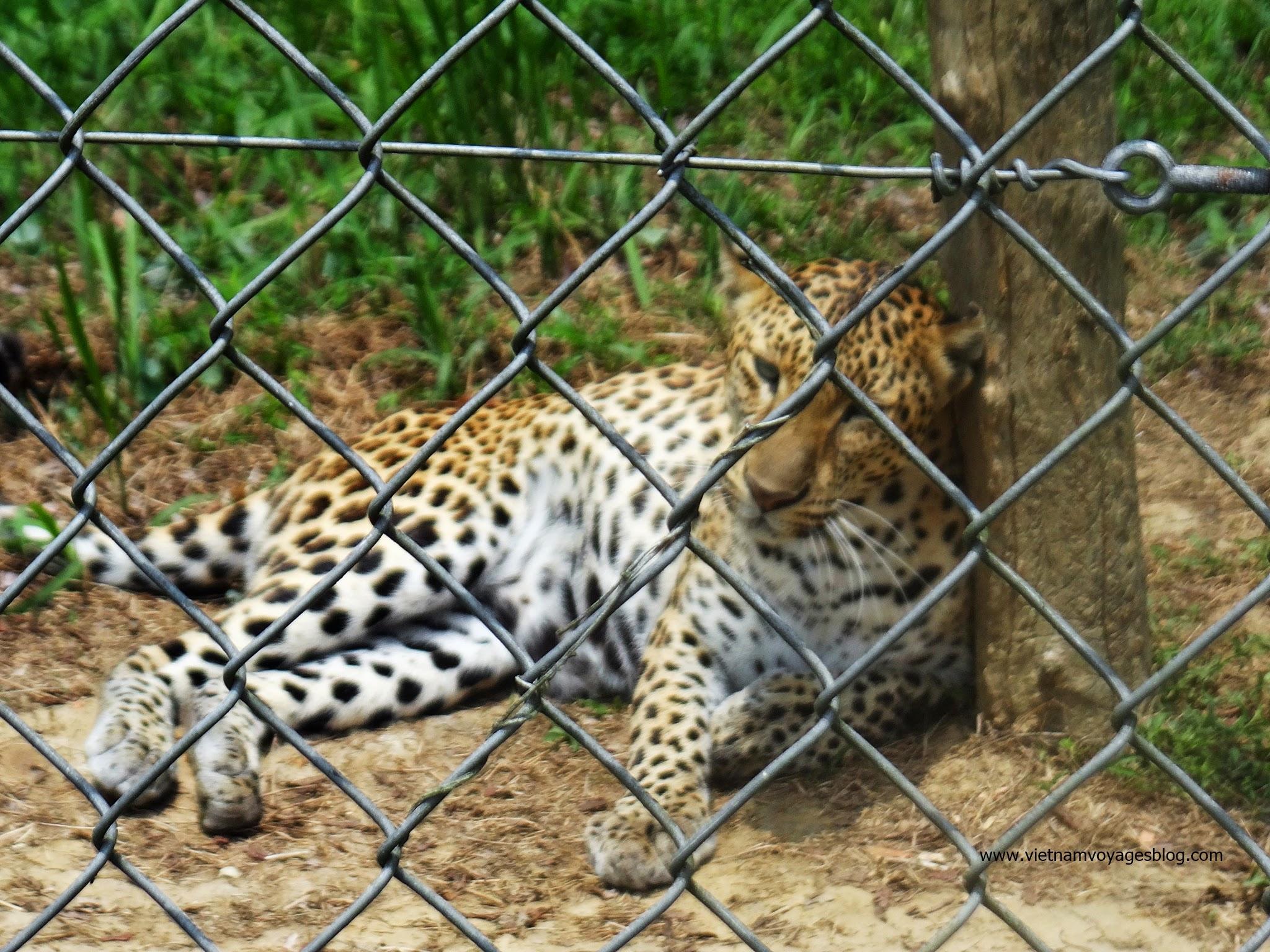Báo trong khu bảo tồn rừng Nam Cát Tiên