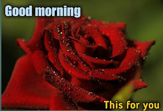 good morning real flowers
