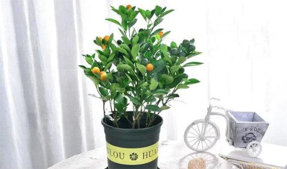 家中養什麼植物最旺?可以為家人聚氣生財廣開福祿?