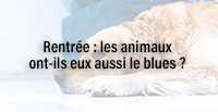 Rentrée : les animaux ont-ils eux aussi le blues ?