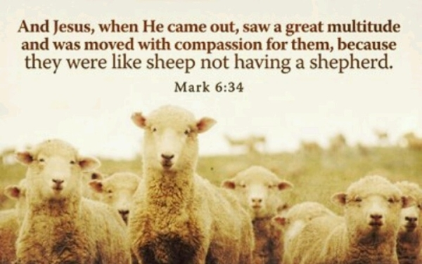 When Jesus landed and saw a large crowd, he had compassion on them, because they were like sheep without a shepherd. So he began teaching them many things.