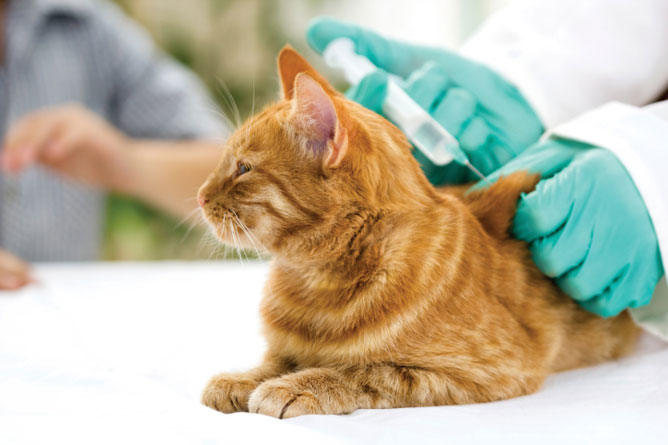Manfaat Vitamin Bulu Kucing dari Caesar Jac'o