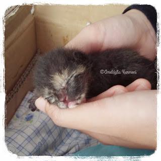bayi kucing sakit diare