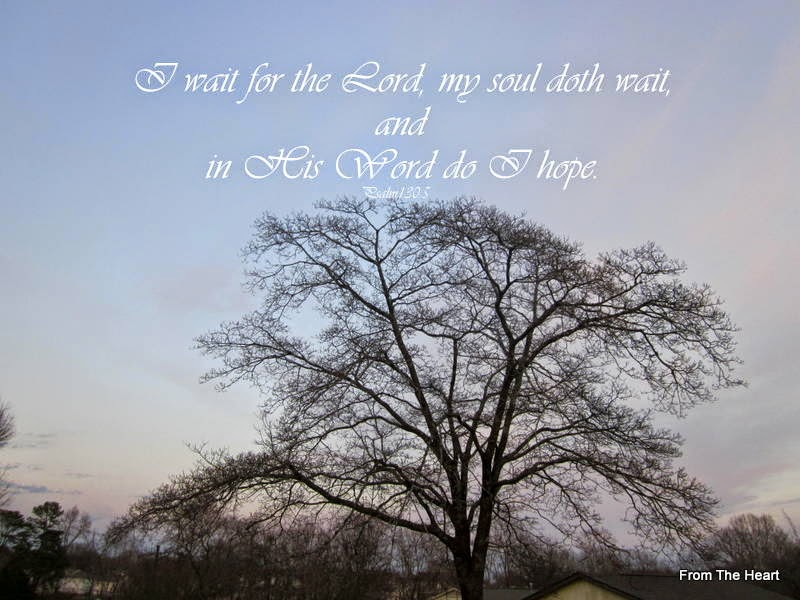 Bible Quotes About Trees. QuotesGram