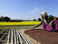 Bisnis Online Dari Desa Yang Menguntungkan Untuk Pemula