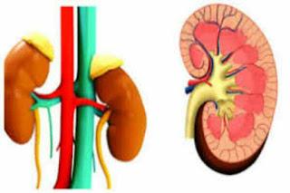 Kidney kharab hone ke lakshan