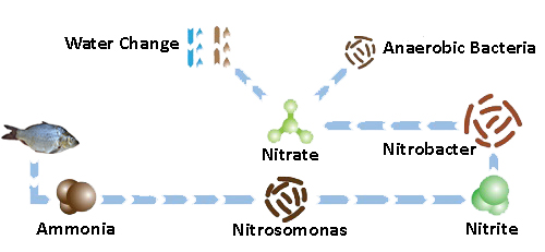Aerobic & anaerobic bacteria