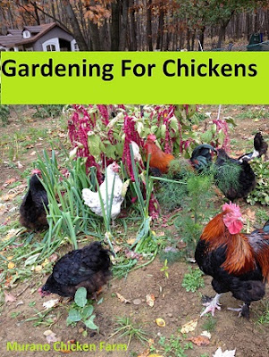 Gardening for chickens