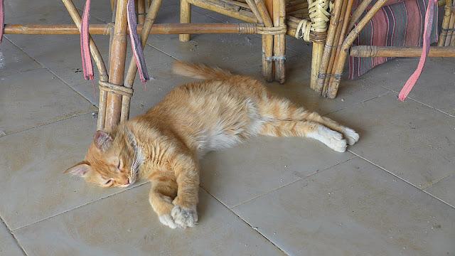 Rote Katze liegt auf dem Boden und schläft in einer Raststätte