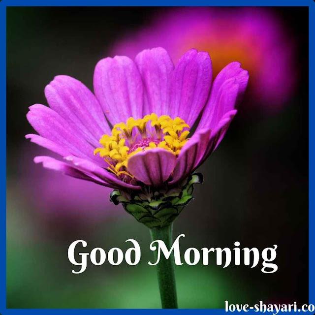 good morning beautiful images