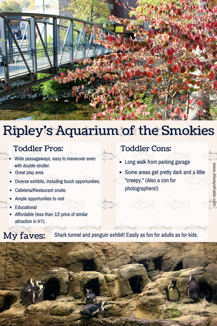 Always Katie Review Of Ripley 39 S Aquarium Of The Smokies