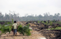 Indonesia has fed the world's appetite for palm oil by chopping down its tropical forests to clear space for palm plantations, while Brazil has lost rainforest for cattle ranches. Investors are now pressuring food companies to find more sustainable sources for ingredients. (Credit: Dimas Ardian/Getty Images) Click to Enlarge.