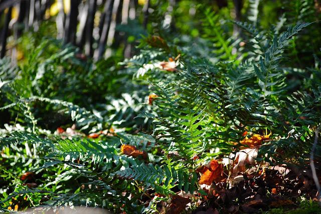 Växter i skuggiga skogsbryn