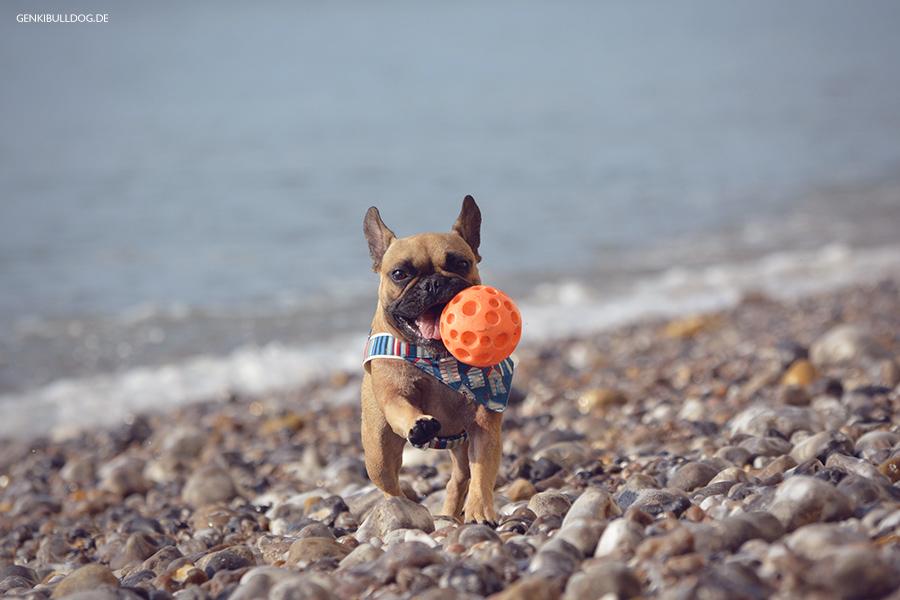 Hundeblog - Urlaub miit Hund in Frankreich in der Normandie