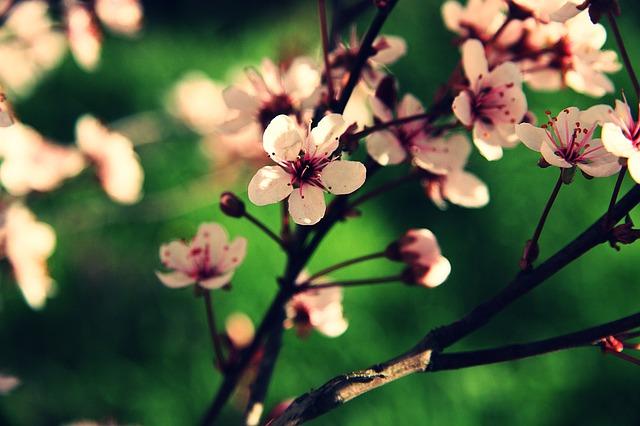 Wiosenny przegląd tygodnia, a właściwie miesiąca