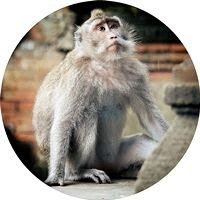 Monkey Forest: Santuario natural en Ubud (Bali)