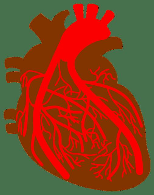 Expert advice: नातं हृदयाचं रक्तवाहिन्यांशी...