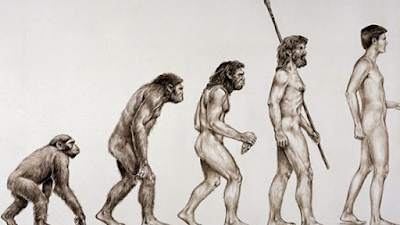 Os erros e contradições da teoria da evolução