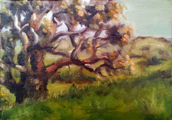Oil painting of a gnarled manna gum on a hillside, with rolling hills in the distance.