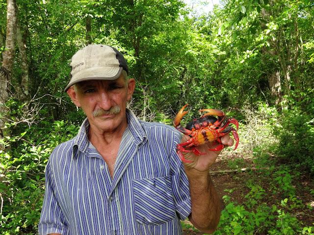 crabe playa larga Cuba