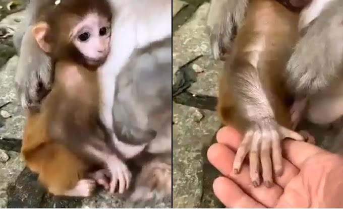 This Cute video of love between human and animal is cuteness overload