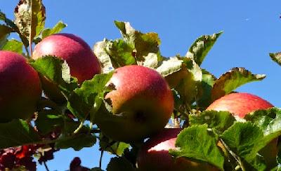 Pesticidas en manzanas
