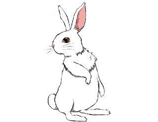 Gambar kelinci putih