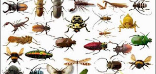 أغرب واذكي 3 حشرات في العالم الجزء الاخير