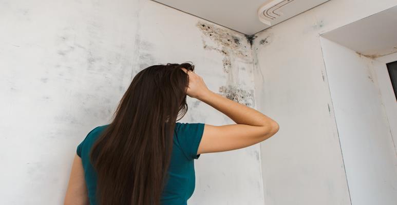 Wilgoć - grzyb na ścianach