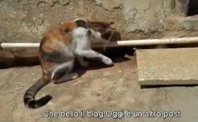 gatto con i sottotitoli